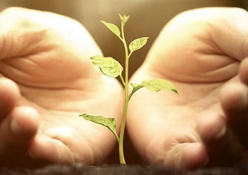 sprout between hands